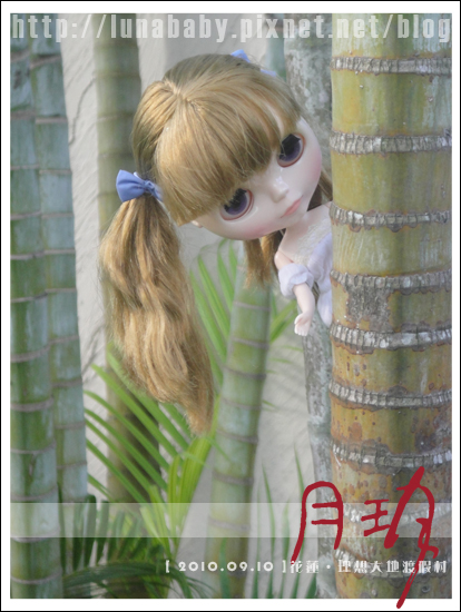 20100909花蓮理想大地17.jpg