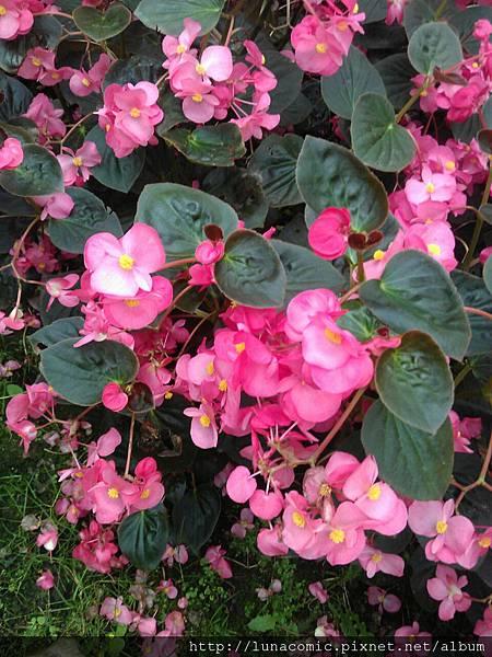 2012-09-03-13-54-43_photo