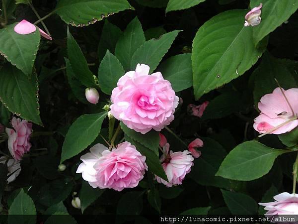 2012-09-03-13-55-36_photo
