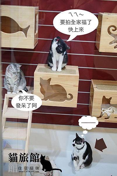 貓館83-一家貓02
