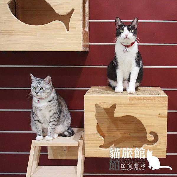 貓館83-一家貓01