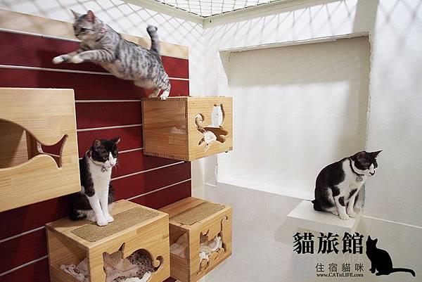 貓館83-一家貓03