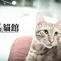 貓館119