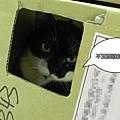 貓館123