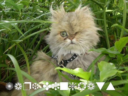 用貓咪來對應word的字型19