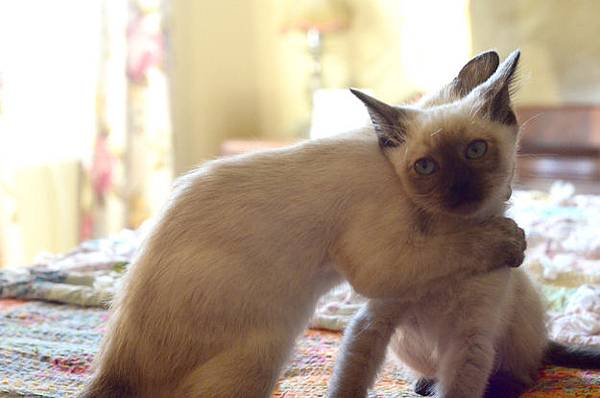 貓咪的25種擁抱-1. 歉抱