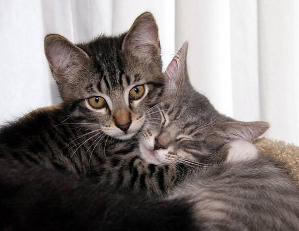 貓咪的25種擁抱-3. 緊抱