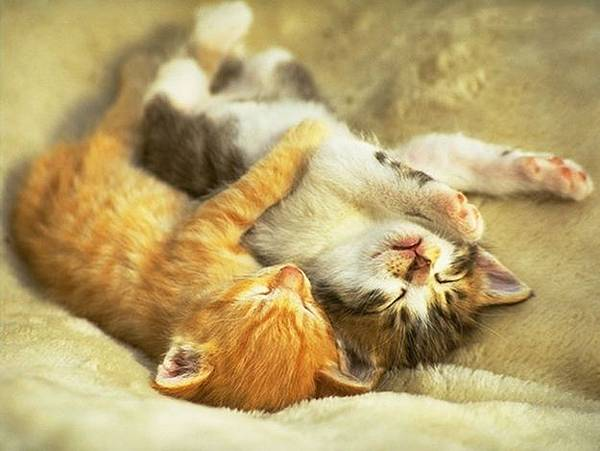 貓咪的25種擁抱-2. 調情抱