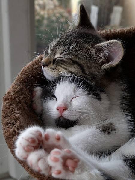 貓咪的25種擁抱-5. 疊抱