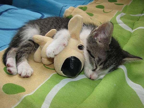 貓咪的25種擁抱-4. 護抱