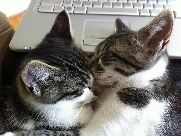 貓咪的25種擁抱-7. 斷線抱
