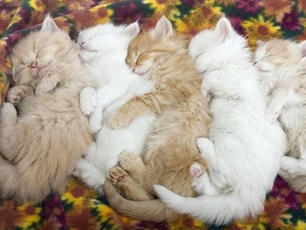 貓咪的25種擁抱-6. 大鍋抱