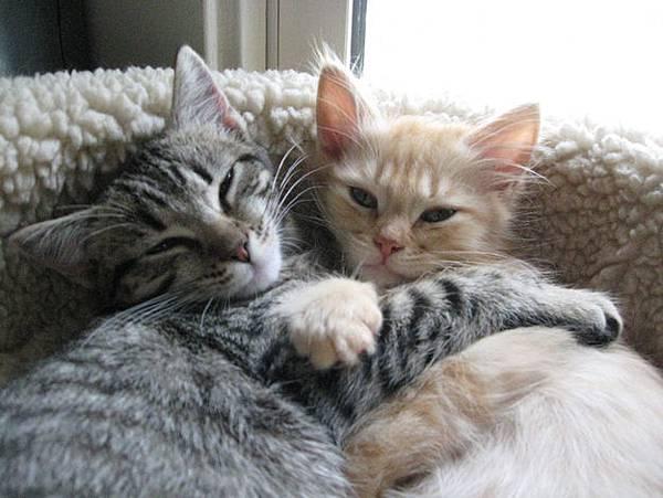 貓咪的25種擁抱-10. 看啥小抱