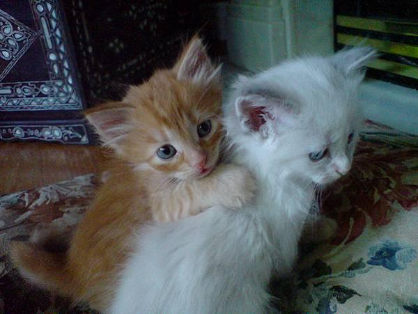 貓咪的25種擁抱-12. 慰抱