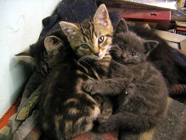 貓咪的25種擁抱-14. 忘了別人抱