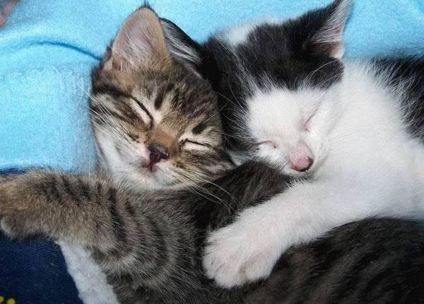 貓咪的25種擁抱-16. 夢享抱