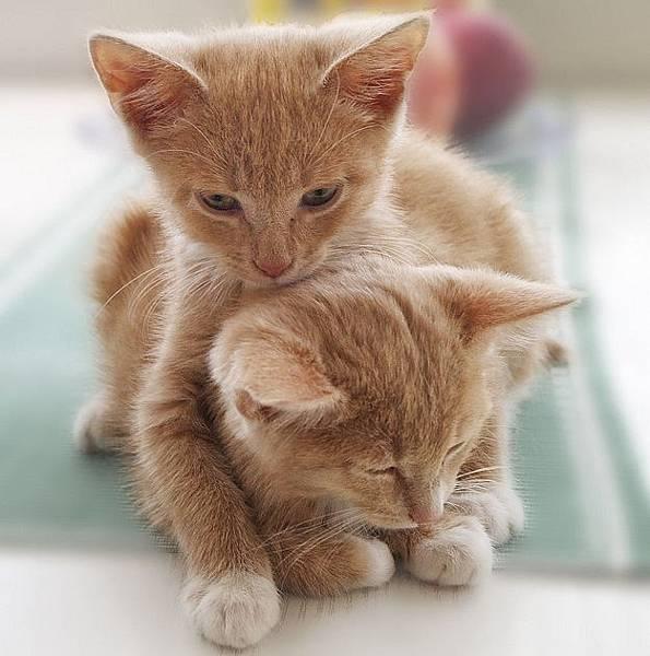 貓咪的25種擁抱-19. 別走抱