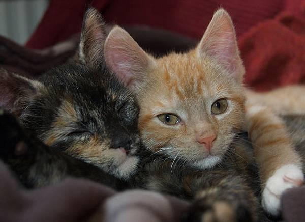 貓咪的25種擁抱-20. 失眠抱