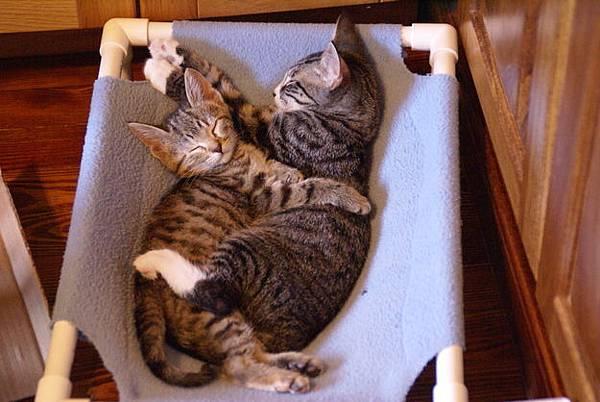 貓咪的25種擁抱-21. 吊床抱