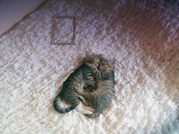 貓咪的25種擁抱-23. 曦抱