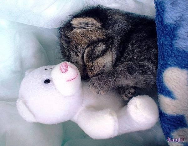 貓咪的25種擁抱-24. 熊抱