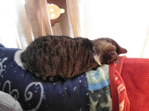 貓界最新流行睡姿~五體投地睡法14