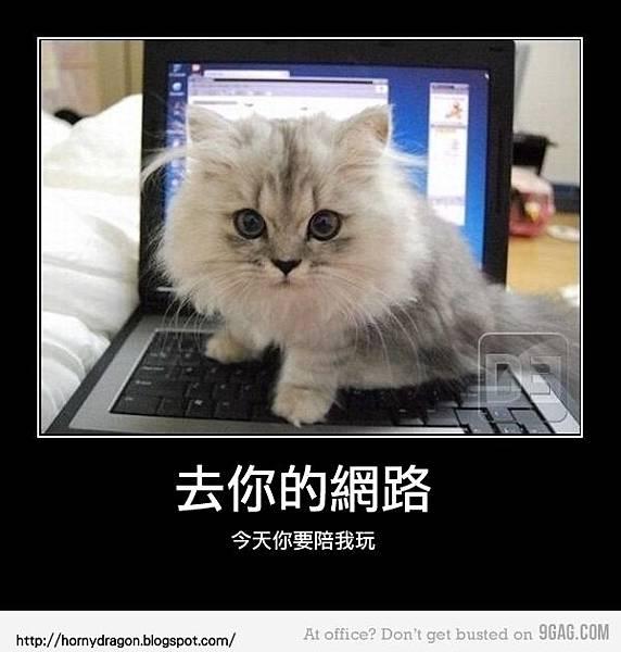 10_kitty