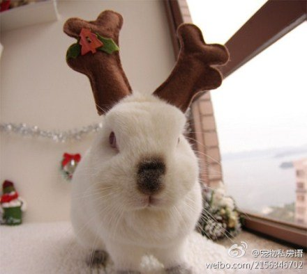 20111224-麋鹿兔