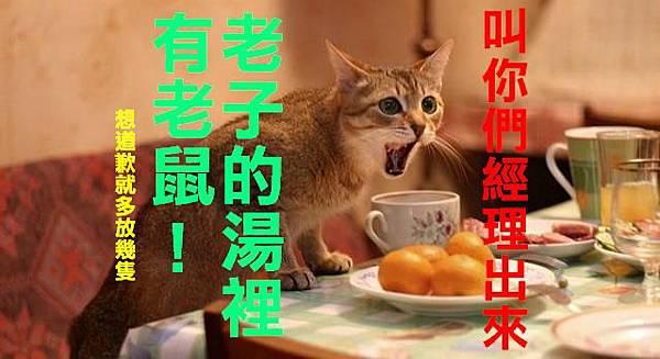 貓-老子的湯裡有老鼠