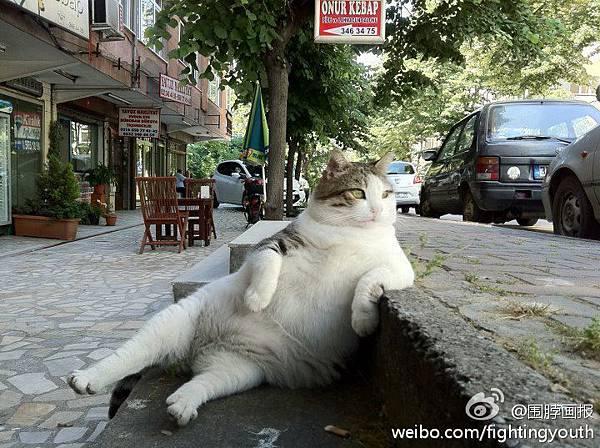 貓-何等雍容