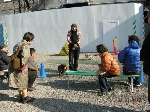 淺草神社裡有人耍猴