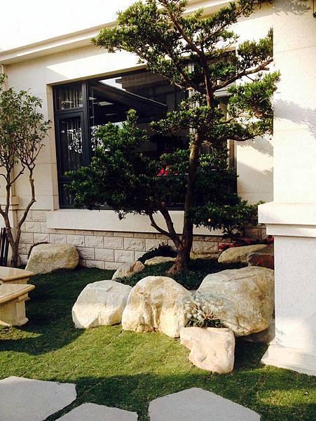 1羅漢松主樹設計,讓家園更有生氣