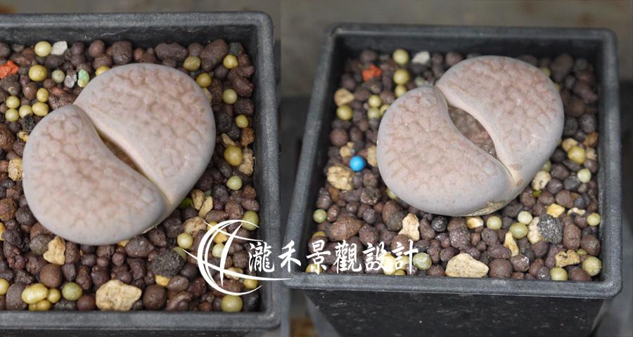 石頭玉02