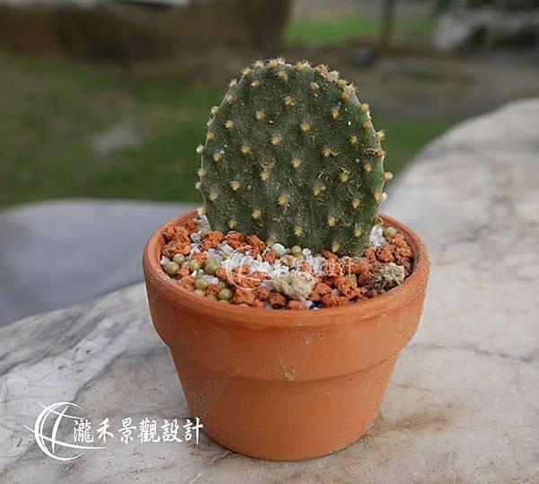 lungho-Cactaceae-0821-06.jpg