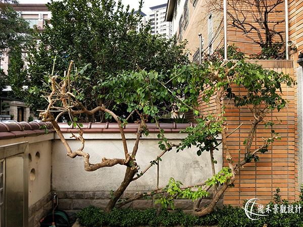 1071120-lunhgo-Garden maintenance-002.jpg