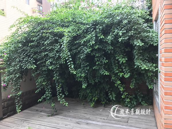 1071120-lunhgo-Garden maintenance-001.jpg