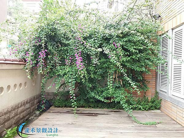 1080410-lungho-prune-001.jpg