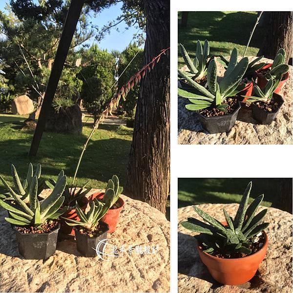 lungho-Succulent-112203.jpg