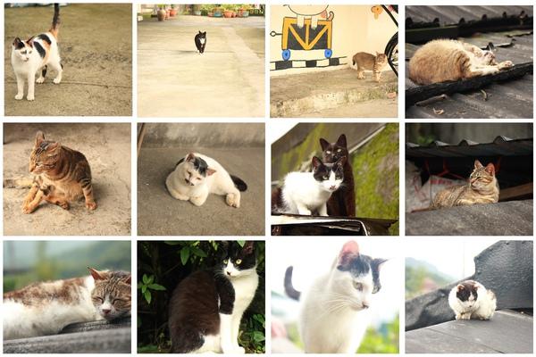 貓咪整理.jpg