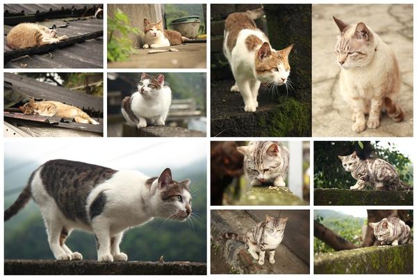 貓咪整理2.jpg