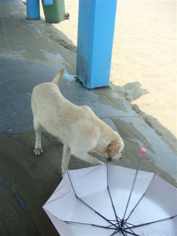 不怎麼討喜~因為我跟ada都怕狗