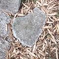 剛好看到一個長的像愛情的石頭~