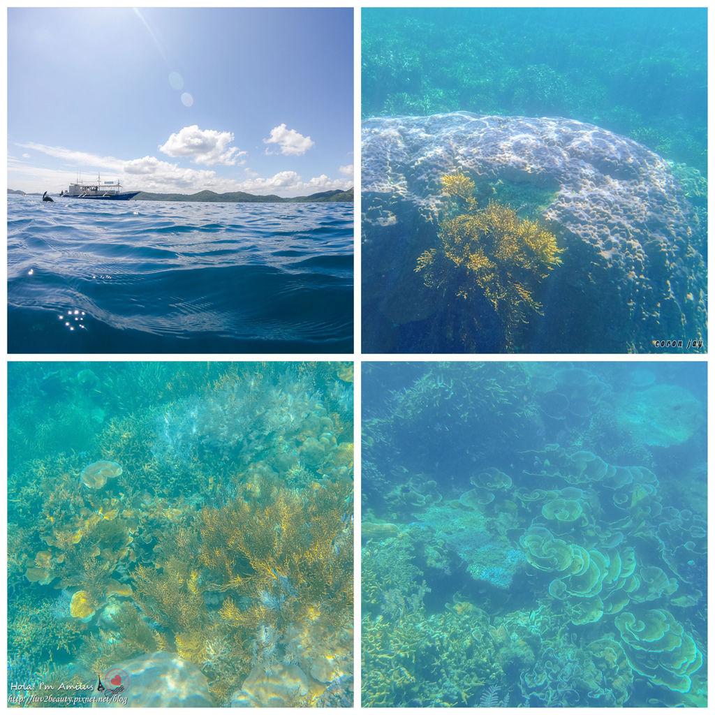 12珊瑚花園.jpg