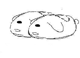 兔啪.jpg