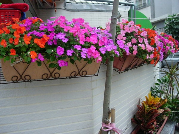 店外小花園