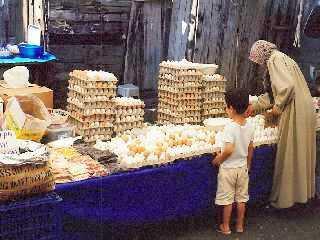 伊斯坦堡市民.jpg