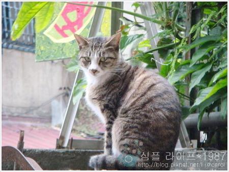 貓薄荷店貓小花