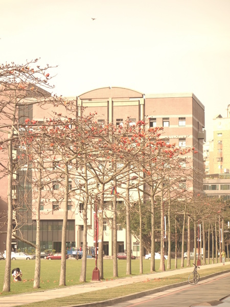 國立清華大學(National Tsing Hua University):清華大學+木棉花季+畢業季+美麗校園+旺宏館+清夜美食