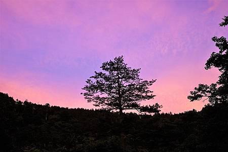 【台中和平區 | 景點】慢遊遠離塵囂的絕美山林♣武陵農場 x 富野渡假村二日遊