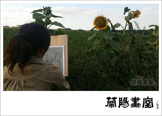 向日葵寫生